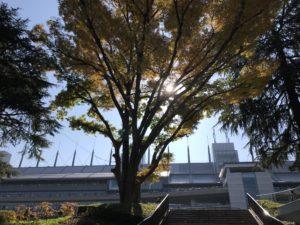 秋スタンド2